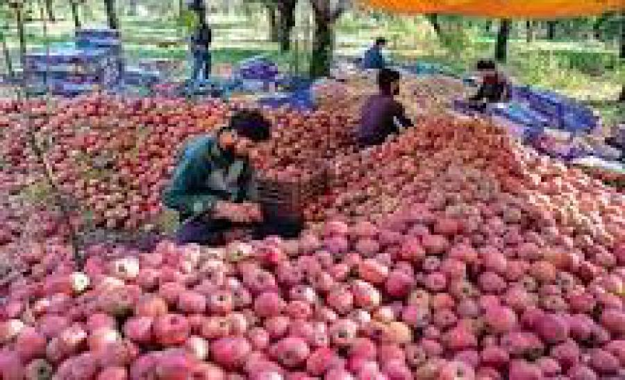 बेरोजगारी घटी, निवेश बढ़ा, जानें एक साल में कैसी रही जम्मू-कश्मीर की इकोनॉमी?